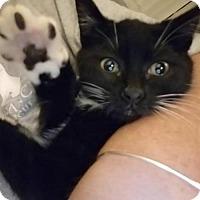 Adopt A Pet :: JERRY - Southampton, NY