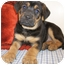 Photo 2 - Boxer/German Shepherd Dog Mix Puppy for adoption in Struthers, Ohio - Hercules
