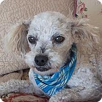 Adopt A Pet :: **Benji** - Stockton, CA