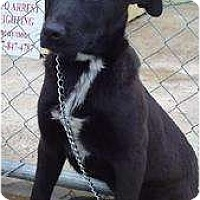 Adopt A Pet :: Patty - Westbrook, CT
