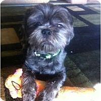 Adopt A Pet :: Won Ton - Oceanside, CA