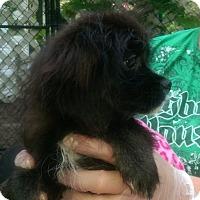Adopt A Pet :: Henrietta - Antioch, IL