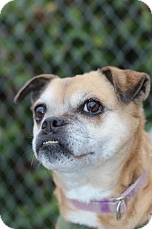 Pug Mix Dog for adoption in Grants Pass, Oregon - Peggy