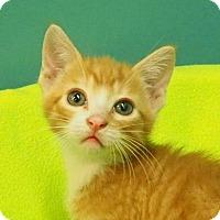 Adopt A Pet :: Eric - New Orleans, LA