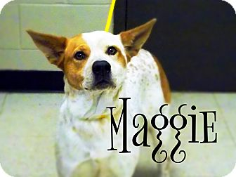 Australian Cattle Dog Mix Dog for adoption in Defiance, Ohio - Maggie