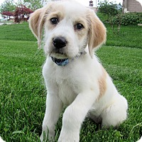 Adopt A Pet :: Emily - New Oxford, PA