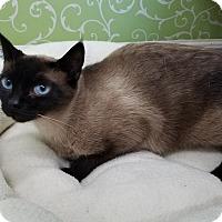 Adopt A Pet :: Kamilah - Red Wing, MN