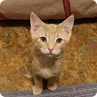 Adopt A Pet :: PETEY - Mesa, AZ