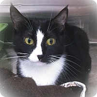 Adopt A Pet :: Faze - Webster, MA