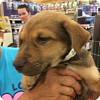 Adopt A Pet :: Poochie - Hohenwald, TN