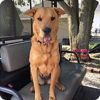 Adopt A Pet :: Penney - Lombard, IL