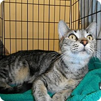 Adopt A Pet :: zz - Ana (courtesy listing) - West Palm Beach, FL