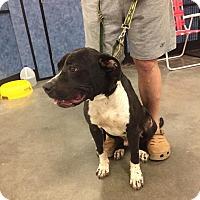 Adopt A Pet :: Hamilton - Midlothian, VA