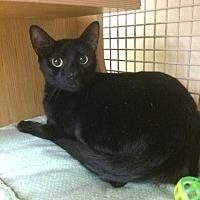 Adopt A Pet :: George - Spring, TX