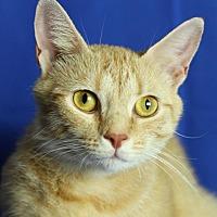 Adopt A Pet :: Ginger - Winston-Salem, NC