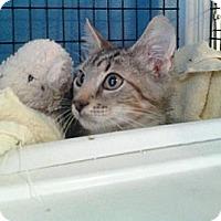Adopt A Pet :: Sweet Baby James - Deerfield Beach, FL