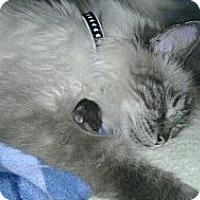 Adopt A Pet :: Up 2 U - Deerfield Beach, FL