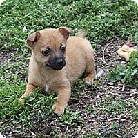 Adopt A Pet :: Callie - PENDING - kennebunkport, ME