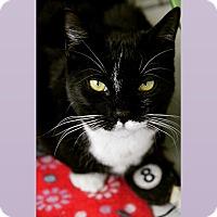 Adopt A Pet :: Layla - Raritan, NJ