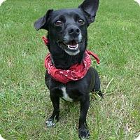Adopt A Pet :: Bobette - Mocksville, NC