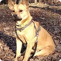 Shepherd (Unknown Type) Mix Dog for adoption in Alpharetta, Georgia - L.L.Bean