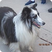 Adopt A Pet :: Taylor - apache junction, AZ