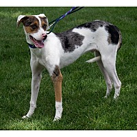 Adopt A Pet :: Stuart - Tempe, AZ