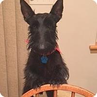 Adopt A Pet :: Liam II - Omaha, NE