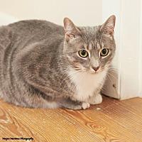 Adopt A Pet :: Boo - Knoxville, TN