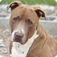 Adopt A Pet :: Fatman - Hooksett, NH