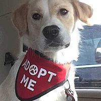 Adopt A Pet :: Bailey - Sarasota, FL