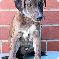 Adopt A Pet :: Dell - Waldorf, MD