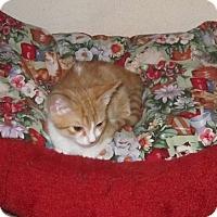 Adopt A Pet :: Meg - Seminole, FL