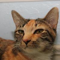Adopt A Pet :: Dorie - Venice, FL