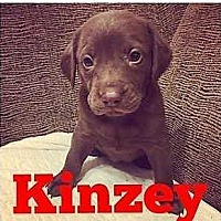 Adopt A Pet :: Kinzey Lake - Boston, MA