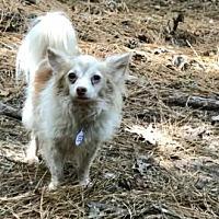 Adopt A Pet :: Jude - Cary, NC