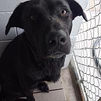 Adopt A Pet :: HARVEY--URGENT!!! - Seabrook, NH