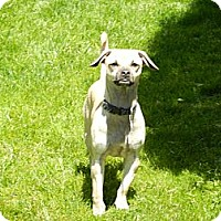 Adopt A Pet :: Rex - South Jersey, NJ