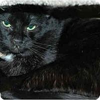 Adopt A Pet :: Percy Junior - Warminster, PA