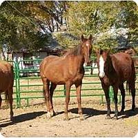 Adopt A Pet :: Max - Pueblo, CO