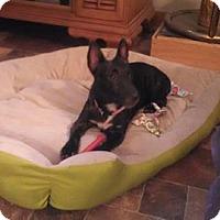 Adopt A Pet :: Shelley # 921 - Nixa, MO