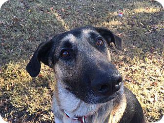 German Shepherd Dog Mix Dog for adoption in Greeneville, Tennessee - Gunter (bonded to Greta)
