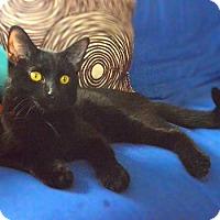 Adopt A Pet :: Ryuk - Chicago, IL