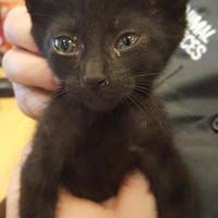 Adopt A Pet :: Jemma - Mesquite, TX