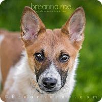 Adopt A Pet :: Sans - Sheboygan, WI