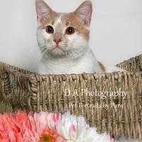 Adopt A Pet :: Duncan - Fond du Lac, WI