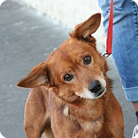 Adopt A Pet :: Mikey - Palmdale, CA