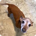 Adopt A Pet :: Riley (COURTESY POST)