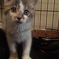 Adopt A Pet :: mist - Sacramento, CA