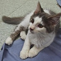 Adopt A Pet :: Firefly - Nashville, IN